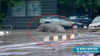 Inondations en Géorgie : les animaux s'échappent du zoo. Un lion tue un homme