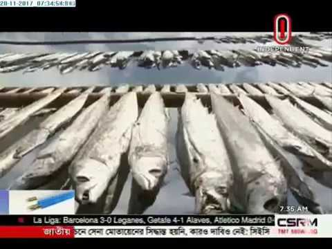 Dry fish season makes Dublar Chor lively (20-11-2017)