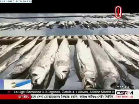Dry fish season makes Dublar Chor lively (20-11-2017)