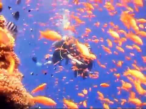 Meu mergulho no Mar Vermelho. Mega legal esse vídeo de 2 min.