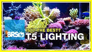 Week 19: Compelling data for using T5 on your reef tank  | 52 Weeks of Reefing #BRS160