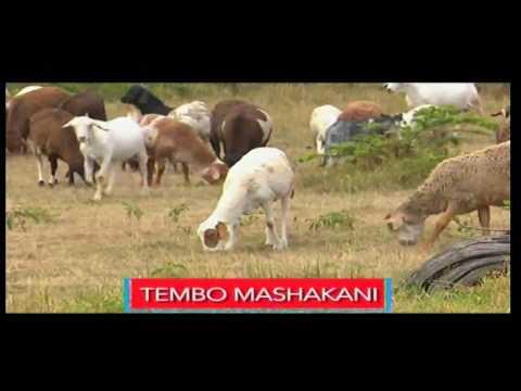 Tembo Mashakani [PROMO] na Hussein Mohamed