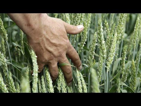 Ρωσία: Απειλείται η παραγωγή σιταριού