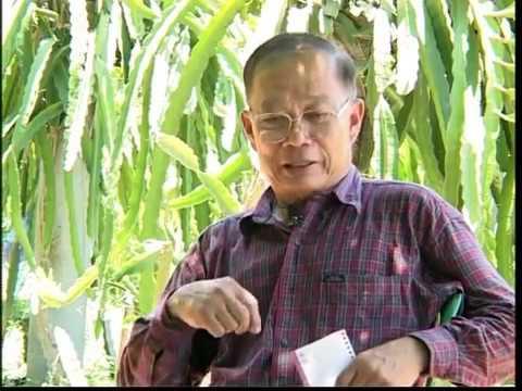 การปลูกแก้วมังกร - ติดต่อได้ที่ สวนแก้วมังกรบ้านโป่ง โทร.0-1825-0945 (ผู้สนใจสำเนารายการเกษตรศาสตร์นำไทย...