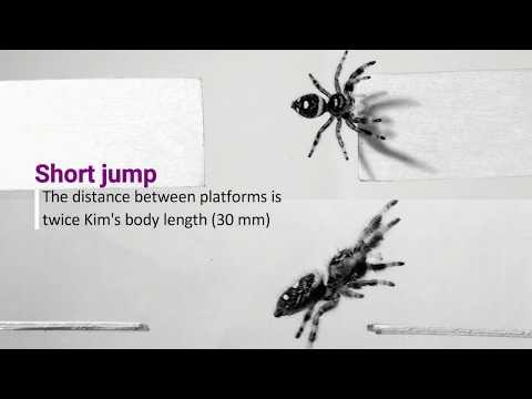 يقوم هؤلاء العلماء بتدريب عنكبوت على القفز عند طلب ذلك منه
