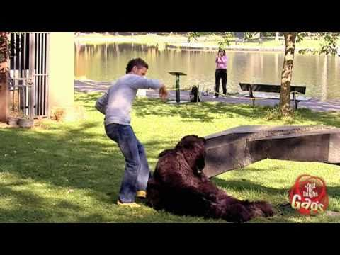 Kick The Bear Prank