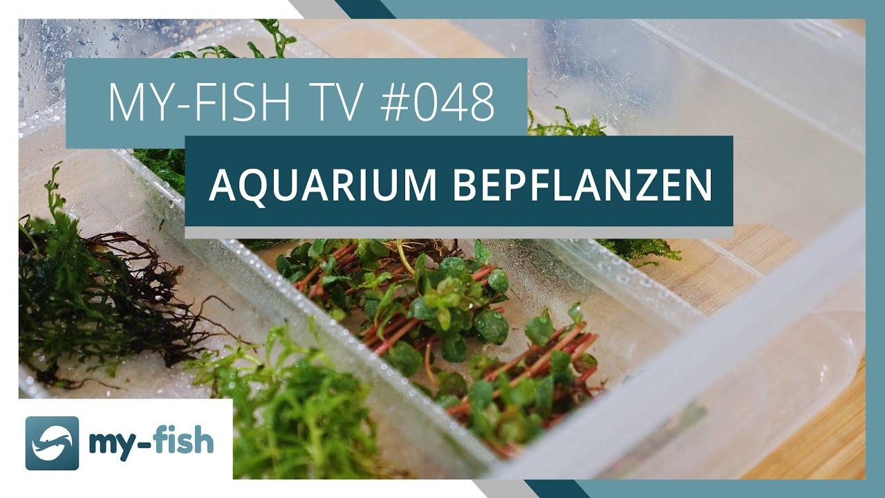 my-fish TV - Deine Nr. 1 Anlaufstelle für alle Themen rund um die Aquaristik 16