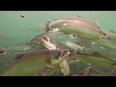 Είναι τα θαλασσινά ασφαλή; – futuris