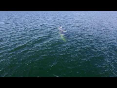 Observation des baleines au Camping Mer et monde écotours