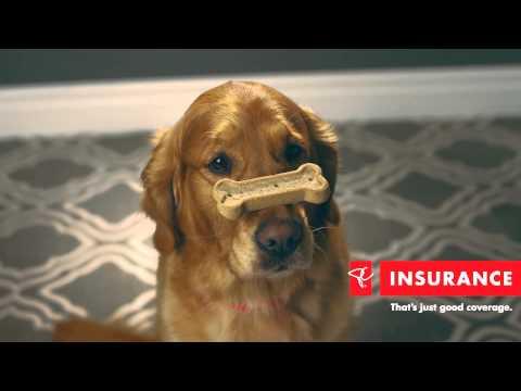 PC Pet Insurance: Balancing Act