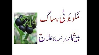 Watch : Arq Makoh (Solanum Nigrum) (Black Nightshade)Ka Sagh Arq Beshmaar Marzon Ka Elaaj Urdu Hindi PunjabiSee More Video Visit and subscribe my YouTube Chanel My You Tube Chanel : https://www.youtube.com/channel/UC7vsCQgI-ZN2mx1egsfQiEQLike My Facebook Page :  https://www.facebook.com/HerbalZindagi/Follow My Twitter Page : https://twitter.com/HerbalZindagiFollow My google plus Page : https://plus.google.com/u/0/100326769246421119640Follow My reddit Page ; https://www.reddit.com/user/HerbalZindagi/