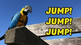 *NEW GAME* Parrot Jumps Over Obstacles 🏃