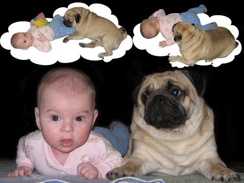 pug and baby... best friends!