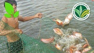 Thủy sản | Lưu ý không thể bỏ qua khi nuôi cá điêu hồng ghép với tôm