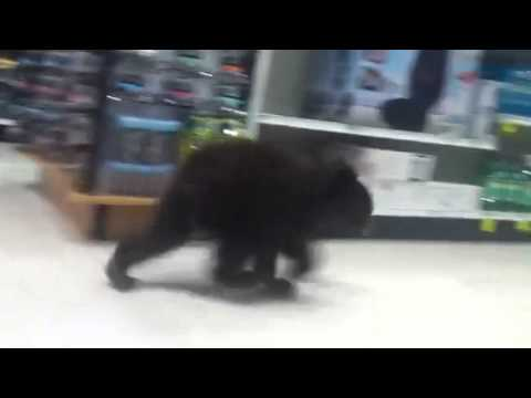 """Un osezno """"se fue de compras"""" en Estados Unidos [VIDEO]"""