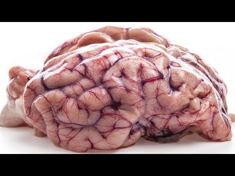 7 Myths About The Brain