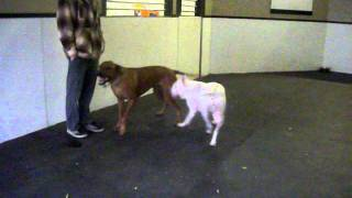 Marley & Blarney at Canine Campus