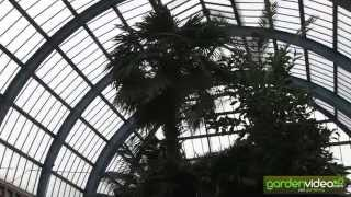 The palm garden at the Alexandra Palace