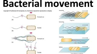 Bacterial movement using flagella