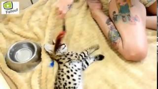 Cute And Funny Exotic Baby Animals Compilation 2013 HD