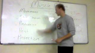 Muscle Functions.wmv