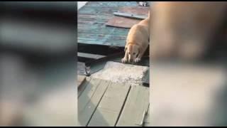 Video Perro gracioso Funny Dog Fail MP3, 3GP, MP4, WEBM, AVI, FLV November 2017