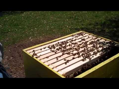 RicsBees Backyard Beekeeping Hive 1 brood chamber frame 10
