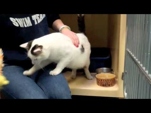 **ADOPTED** Sugar a Sweet Cat - Up for Adoption in New Jersey