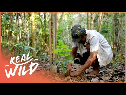 The Secrets Of The Amazon (Wildlife Documentary) | Inside Nature's Marvels S1 EP5 | Real Wild