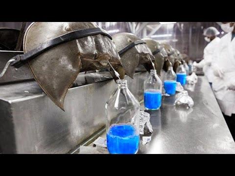 i 10 liquidi più costosi al mondo