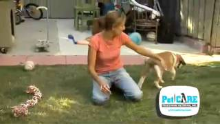 Elimination Problems in Dogs