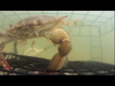 Crabbing with a GoPro Hero
