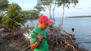 Download Video Mancing dikuala Langsa with Kawan-kawan Ketemu Umar Bakri..hahaha MP3 3GP MP4