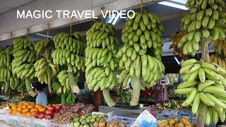 Salalah Oman  city photos gallery : Salalah Tour - OMAN