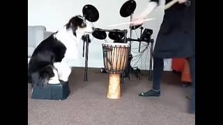 Tak zdolnego psa jeszcze nie widziałam!