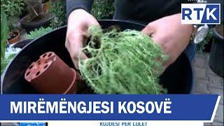 Mirëmëngjesi Kosovë - Kronikë - Këshilla për kujdesin e luleve 08.12.2018