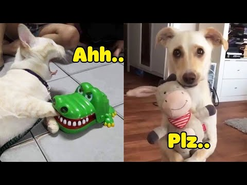 Dogs and Cats Reaction to Toy - Funny Animal Reaction (2020)
