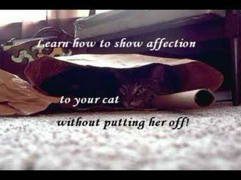 Cat Training Secrets