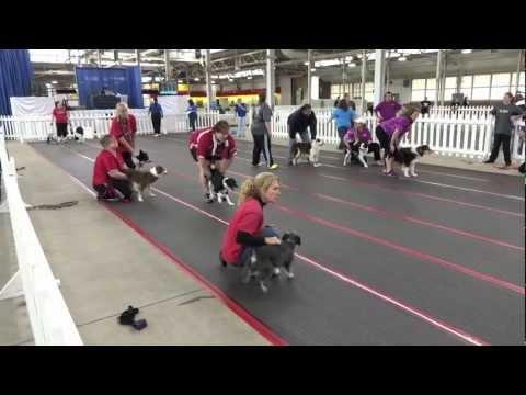 flyball, sport spettacolare per cani dinamici