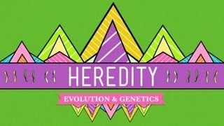 Heredity: Crash Course Biology #9