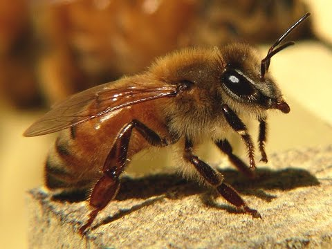 Silence of the Bees (Nature Documentary, Full Length)