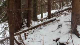 Video Spoločná poľovačka na diviaky Poľana (ulovenie môjho prvého diviaka) MP3, 3GP, MP4, WEBM, AVI, FLV Mei 2017