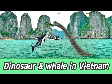 [EN] #83 Dinosaur chase Whales in Vietnam, kids education, learn whales name, CollectaㅣCoCosToy