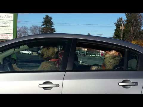Nämä koirat ovat kyllästyneet odottamaan omistajaansa kaupasta