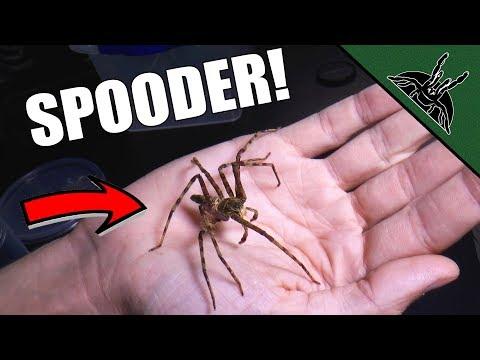 I HANDLED IT! The Spider Shop UK unboxing