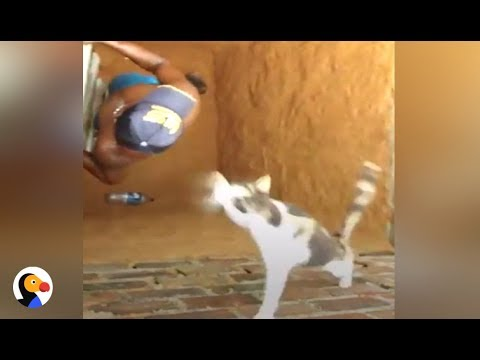 gatto-parkour