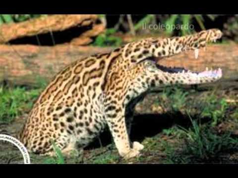 i 20 animali più strani al mondo!