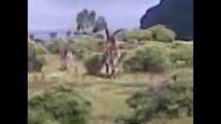 Walia Ibex  Semein Mountains Glory Ethiopia Tours