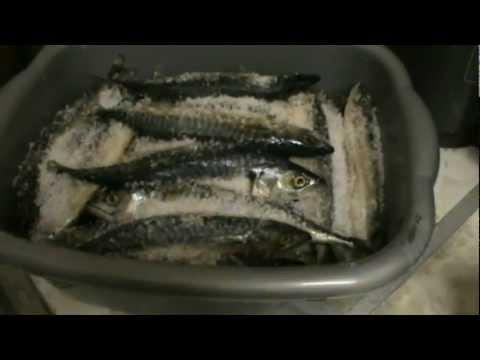 Jak wędzić ryby - wedzenie makreli Najlepszy film w sieci !!!!