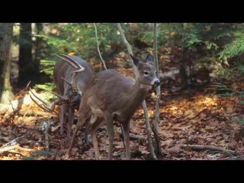 Deer Talk Now
